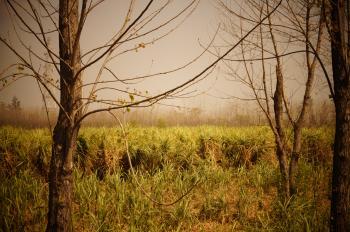 Field of Tall Grass