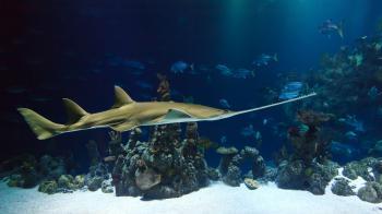 Fish in the Aquarium