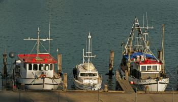 Fishing boats quayside.