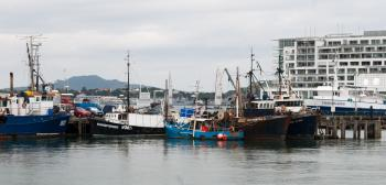 Fishing vessels docked at Viaduct Harbour