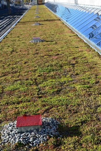 Flat green roof