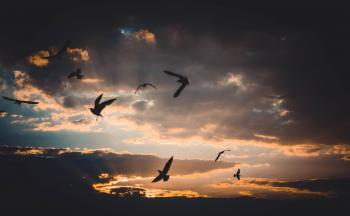 Flock of Birds Flying Above Sky during Sunset