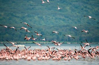 Flock of Flamingo Standing on Body of Water over Viewing Trees
