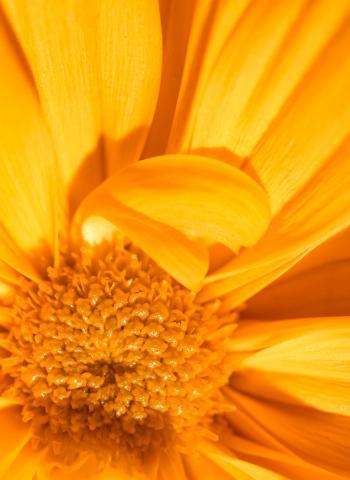 Floral Warmth