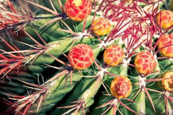 flower cactus plant