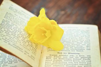 Flower in the Book