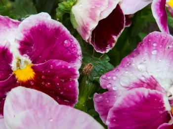 Flowers after the rain
