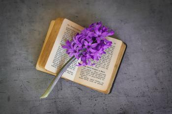 Flowers n Book