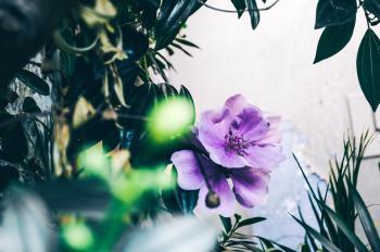 Focus Photography of Purple Flower