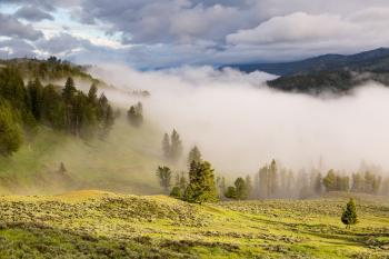 Foggy Green Landscape With Pine Forest at Daytime
