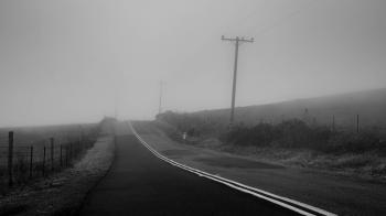Foggy Road in West Marin