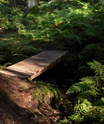 Footbridge and ferns in Gullmarsskogen ravine 1