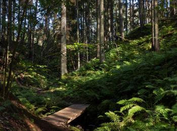 Footbridge and ferns in Gullmarsskogen ravine 2
