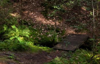 Footbridge and ferns in Gullmarsskogen ravine