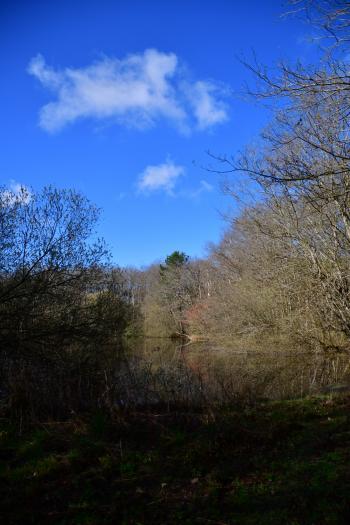 Forêt de Moulière - Le Gâchet de Villiers (voir l'itinéraire sur : http://ansozour.free.fr/Enbalade.html)