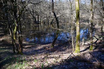 Forêt de Moulière - Le Grand Soubis (voir l'itinéraire sur : http://ansozour.free.fr/Enbalade.html)
