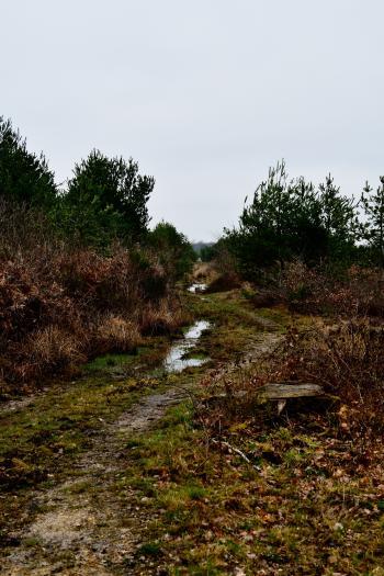 Forêt de Moulière - Les Chirons Noirs (voir l'itinéraire sur : http://ansozour.free.fr/Enbalade.html)