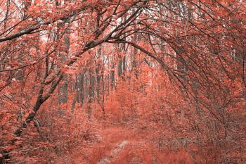 Forest Arch Trail - Salmon Pink