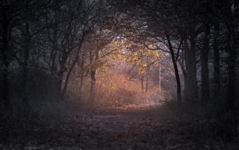 Forest during Dawn