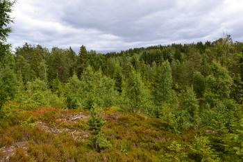 Forest in Norway