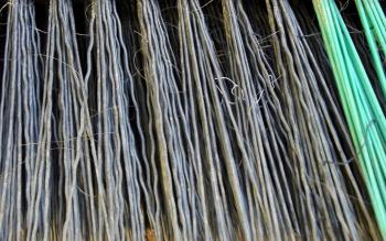 Forest of Bristles