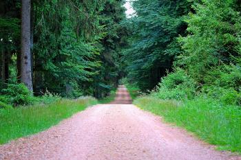 Forest Route