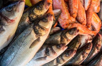 Fresh fish in a market