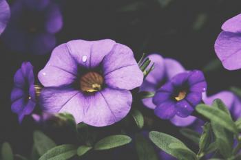 Fresh Purple Flowers