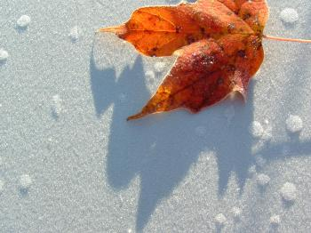 Frost and Leaf