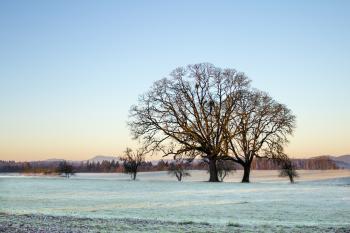 Frost on field