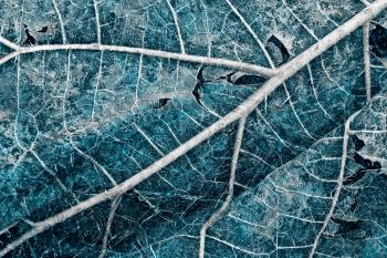 Frozen Winter Leaf