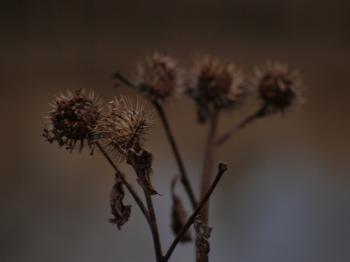 Fuzzy plants