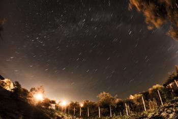 Garden under stars