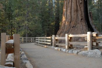 General Sherman Tree Path in Sequoia Nat