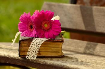Gerbera and old Book