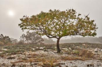 Glowing Mist of Assateague Island - HDR