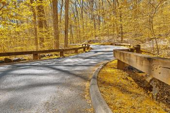 Gold Forest Road - HDR