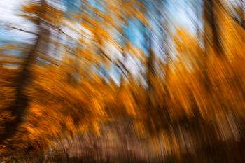 Gold Forest Streaks