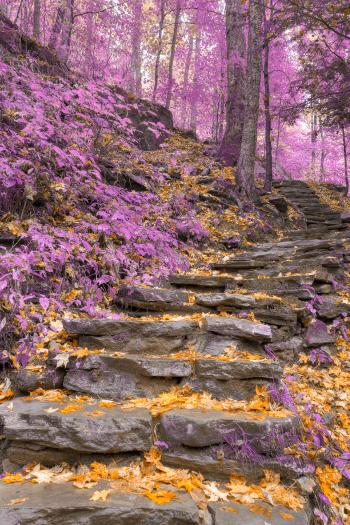 Gold Lavender Staircase - HDR