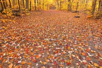 Golden Fall Forest Trail - HDR