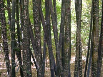 Graffiti on bamboo