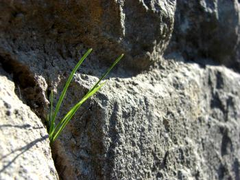 Grass between Rocks
