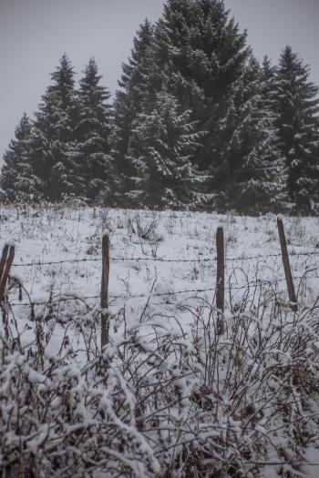 Grass Field Cover by Snow