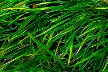 Grass Texture Abstract