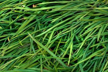 Grass Texture - HDR