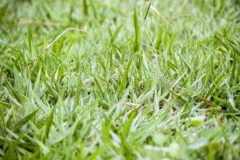 Grass views