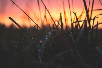 Grass With Water Drops during Sunset