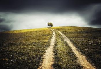 Grassy Route