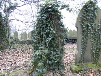 Grave Stone with Ivy Vine