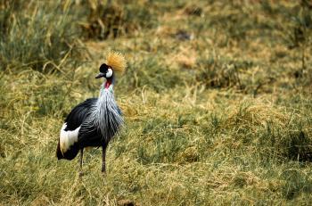 Gray and Black Bird on Green Grass